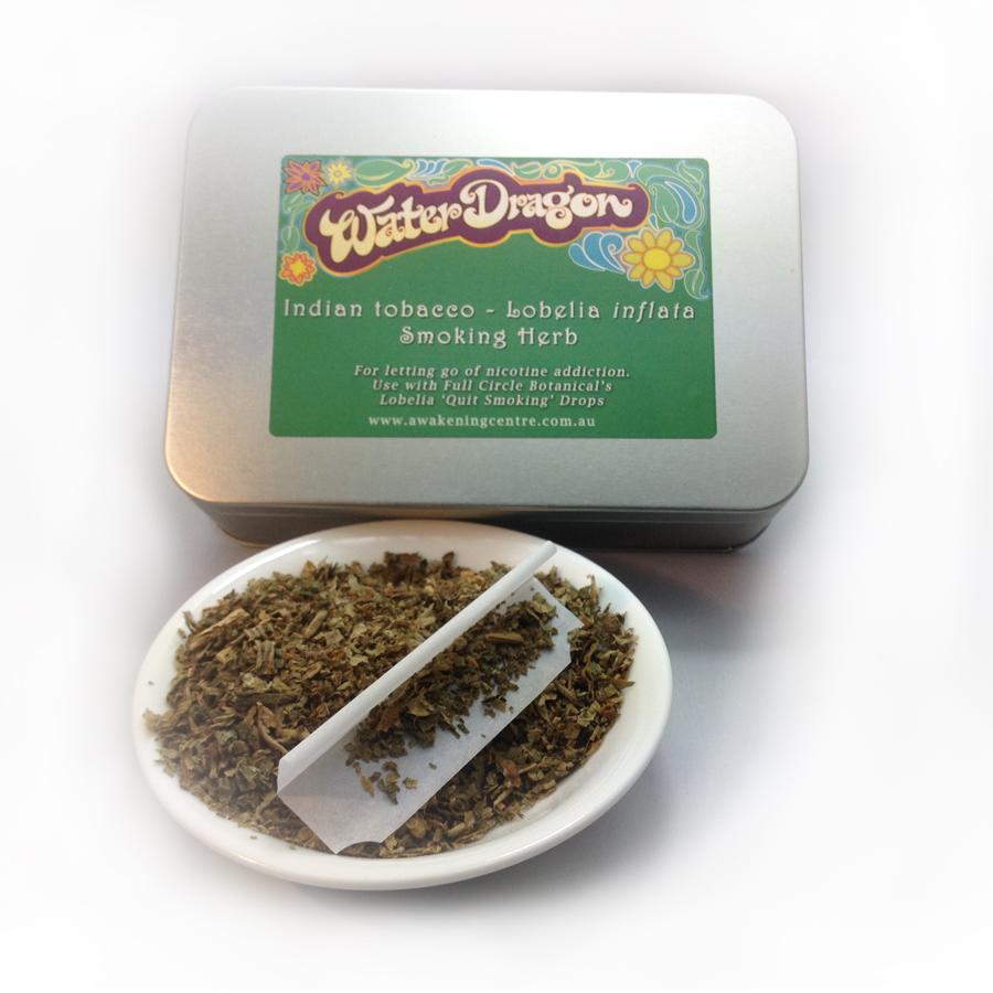 Indian Tobacco Lobelia Inflata Smoking Herb Awakening Centre